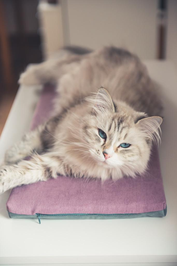dwustronne legowisko dla kota na parapet